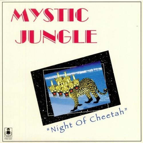 night of cheetah